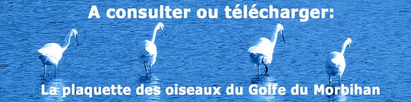 oiseaux du golfe - bouton pdf