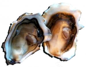 Huîtres de pénerf