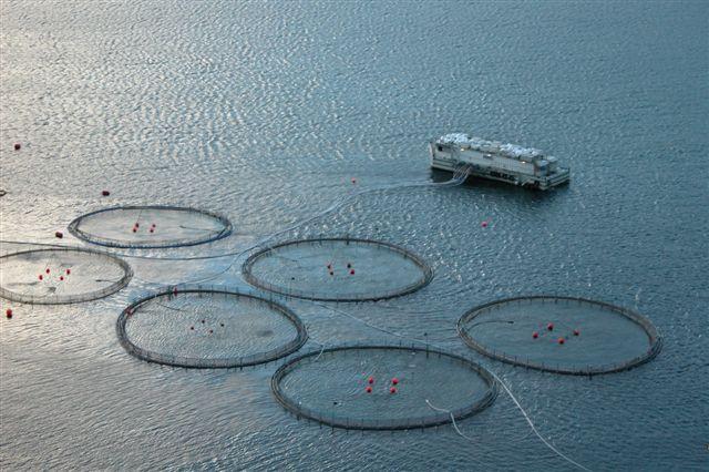 Faroese.fishfarm