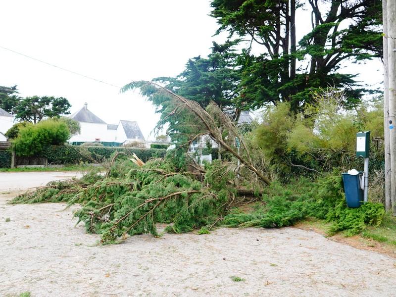 la tempête alex à kervoyal en damgan morbihan (6)