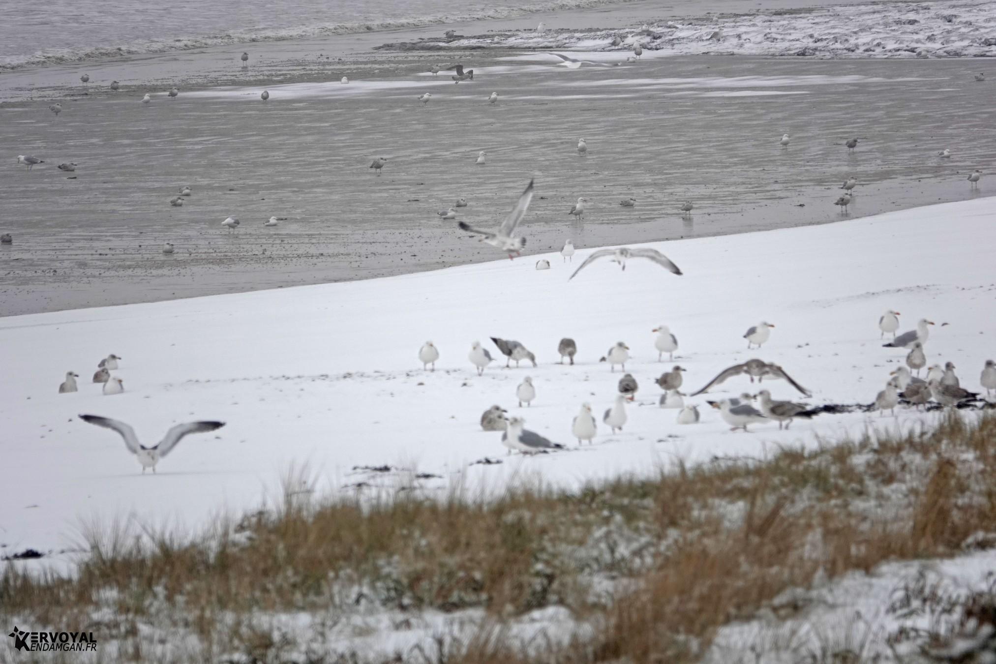 neige à kervoyal 11 février 2021 damgan morbihan (10)
