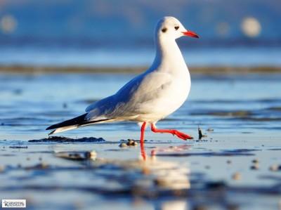 Les oiseaux de kervoyal damgan automne 2020 (10)