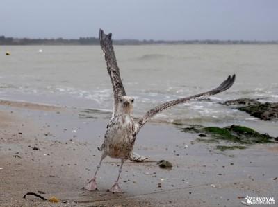 Les oiseaux de kervoyal damgan automne 2020 (11)