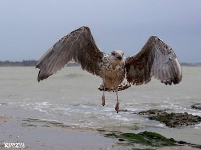 Les oiseaux de kervoyal damgan automne 2020 (13)