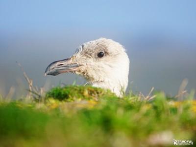 Les oiseaux de kervoyal damgan automne 2020 (16)