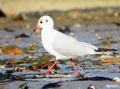 Les oiseaux de kervoyal damgan automne 2020 (18)