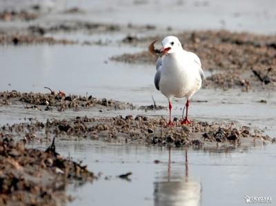Les oiseaux de kervoyal damgan automne 2020 (2)