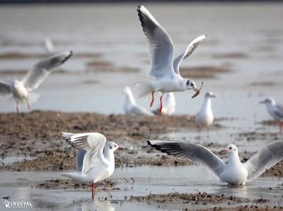 Les oiseaux de kervoyal damgan automne 2020 (3)