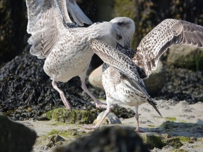 Les oiseaux de kervoyal damgan automne 2020 (5)