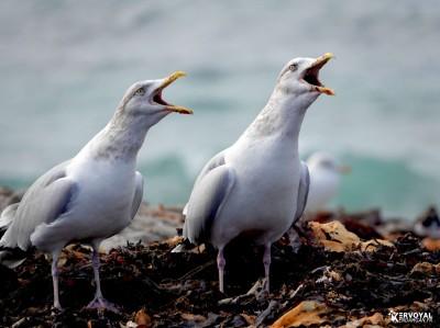 Les oiseaux de kervoyal damgan automne 2020 (7)