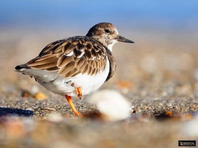 Les oiseaux de kervoyal damgan automne 2020 (9)
