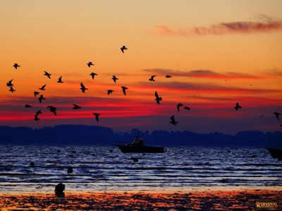lever de soleil kervoyal damgan automne 2020 (24)