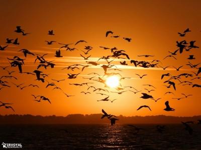 lever de soleil kervoyal damgan automne 2020 (5)